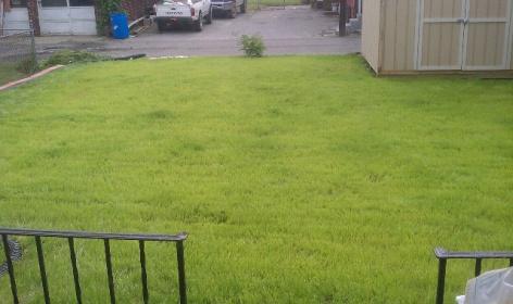 Help with my back 'yard'-forumrunner_20130610_004223.jpg