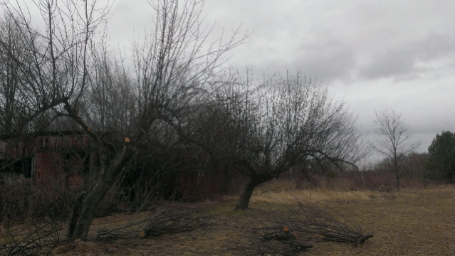 help with apple tree-forumrunner_20140319_142723.jpg