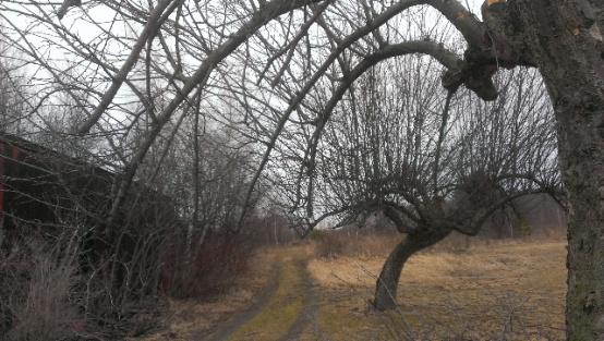 help with apple tree-forumrunner_20140319_142740.jpg
