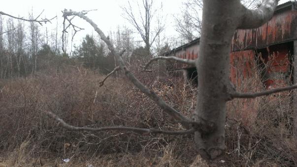 help with apple tree-forumrunner_20140319_142749.jpg