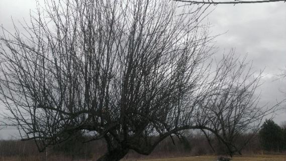 help with apple tree-forumrunner_20140319_142757.jpg