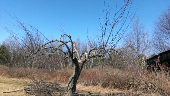 help with apple tree-forumrunner_20140321_135452.jpg