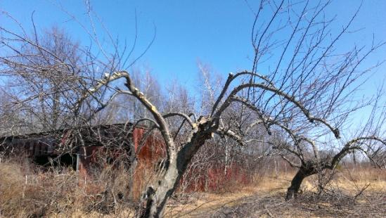 help with apple tree-forumrunner_20140321_135459.jpg