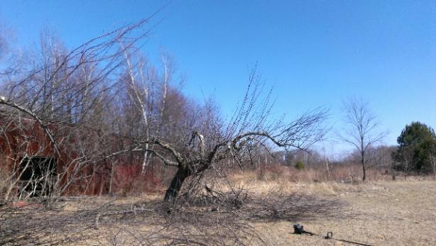 help with apple tree-forumrunner_20140321_135508.jpg