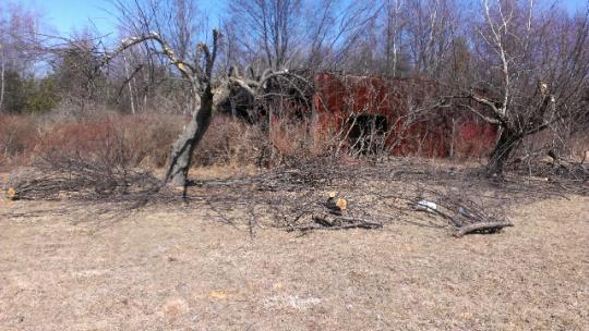 help with apple tree-forumrunner_20140321_135524.jpg