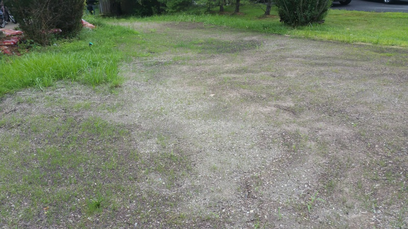 Help- new grass not filling in-front1.jpg