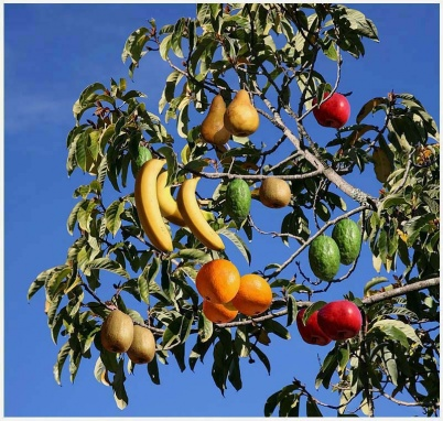Fruit Salad Trees....-fruit_salad.jpg