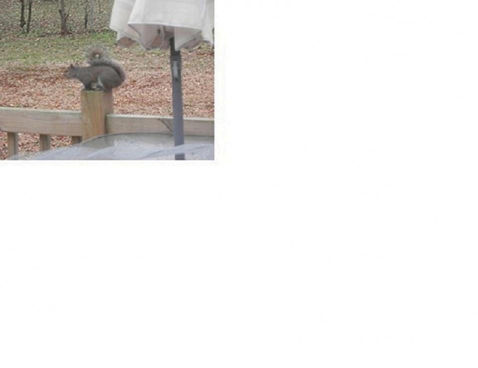 squirrel nest-furry-suspect1.jpg