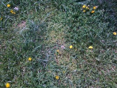 What should I do-grass-004.jpg