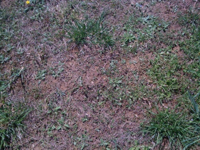 What should I do-grass-005.jpg