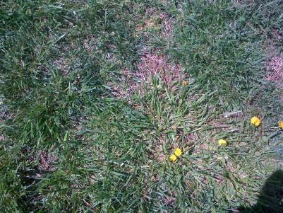 What should I do-grass-006.jpg