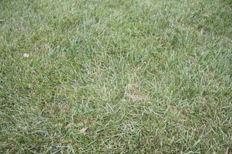 New Home... Existing Lawn-grass.jpg