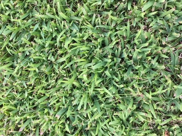 How to get rid of quack grass?-grass.jpg