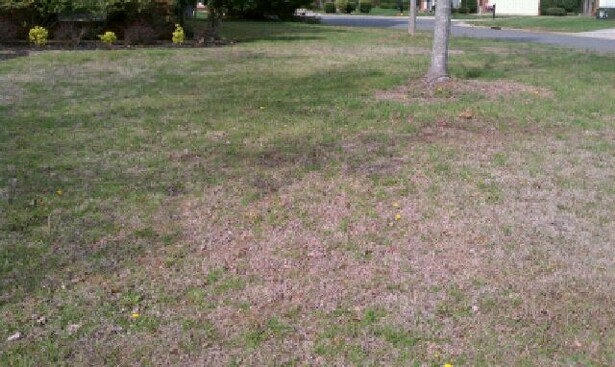 Should I start over or is there hope?-grass2.jpg