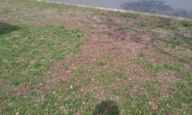 Should I start over or is there hope?-grass3.jpg