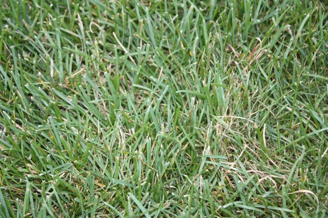 New Home... Existing Lawn-grass_1.jpg