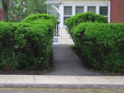 Hedges Out Of Control - When and How to Prune-hedges.jpg