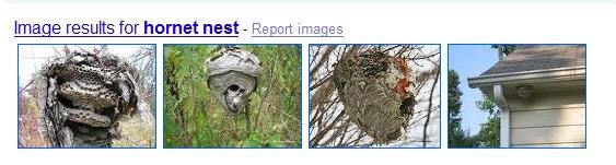 What kind of nest is this ?-hornet-nest.jpg