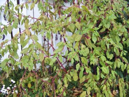 Name this plant!-house-pics-032.jpg