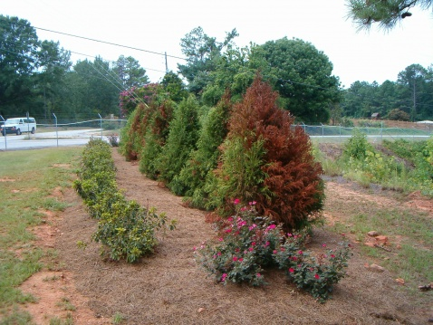 Spider mites!!!  How often can I use Malathion?-hpim1034.jpg