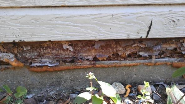 Repairing exterior wall-imag0006.jpg