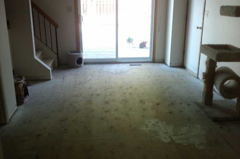 Laminate Floor Underlayment Question-imag0286-small.jpg