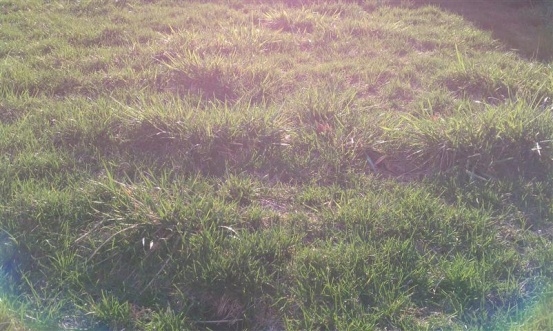 """another """"what is this evil grass"""" thread?-imag0448-small-.jpg"""