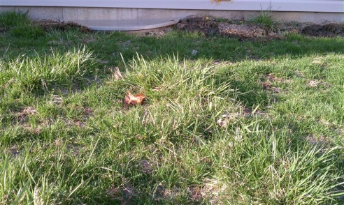 """another """"what is this evil grass"""" thread?-imag0449-small-.jpg"""