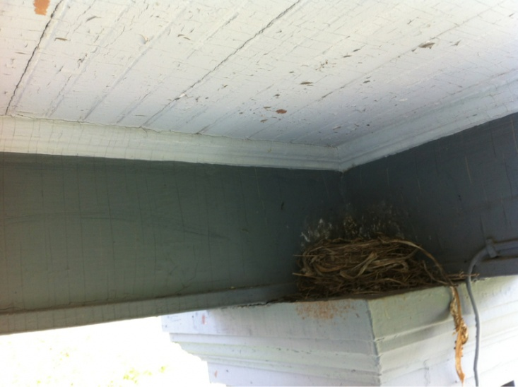 nesting-image-1012299321.jpg