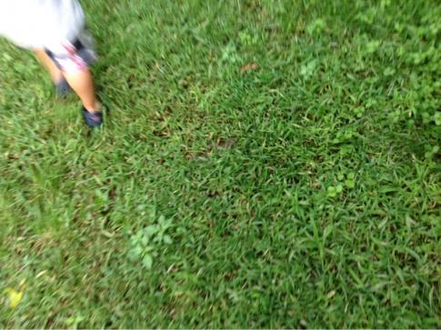 Backyard grass issues NEED HELP-image-1069107896.jpg