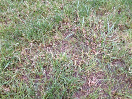 De-thatching lawn-image-1077408436.jpg