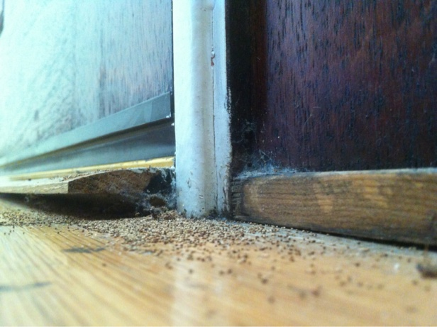 Do I have termites? What should we do?-image-1181256815.jpg