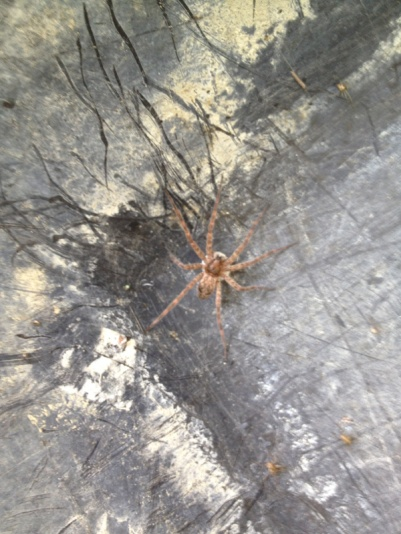 Can someone id this spider?-image-1196377794.jpg