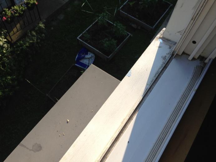 Window Leak-image-1275237240.jpg