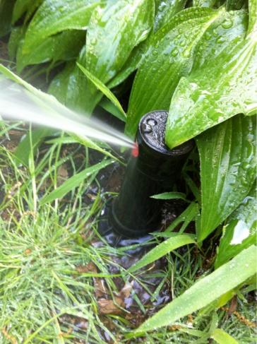 Hunter PGP sprinkler leak-image-131305075.jpg