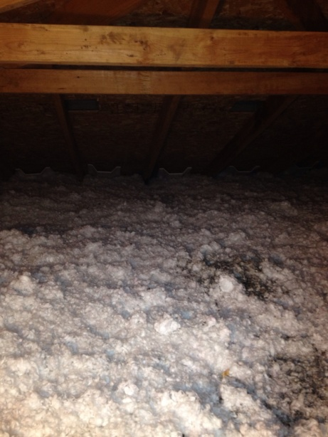 Moisture coming from attic.-image-1359561344.jpg