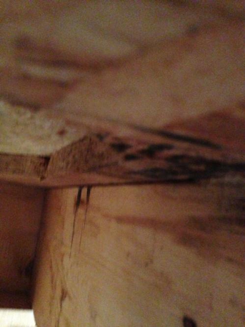 Bouncy Floor-image-1468888992.jpg