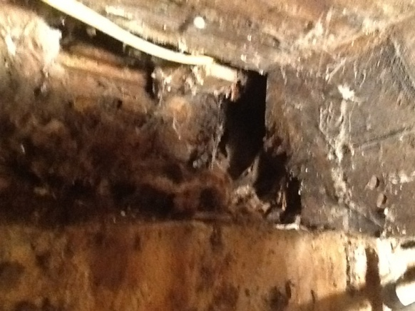 Replacing rotted sill plate in 120 yr old home-image-148959697.jpg