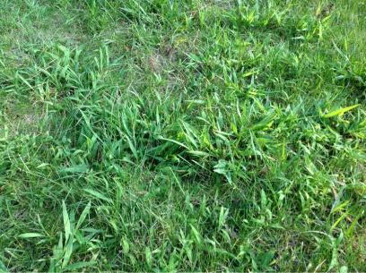 Grass questions-image-1591652860.jpg