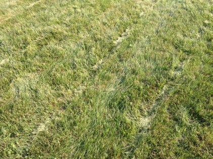 Grass clumps from mulch mowing-image-1644307236.jpg