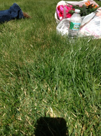 Help with getting greener grass-image-1920164613.jpg