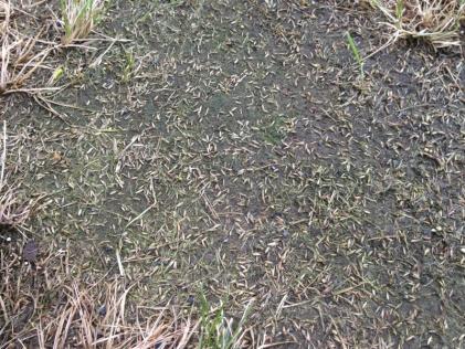 De-thatching lawn-image-2071894519.jpg