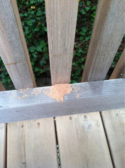 Uhh... What drilled a hole my deck?-image-2109191707.jpg