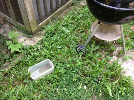 Backyard grass issues NEED HELP-image-2302237403.jpg