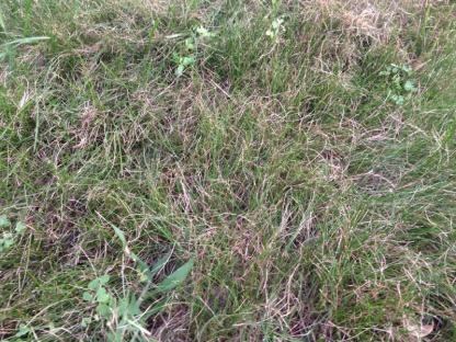 De-thatching lawn-image-2352489745.jpg