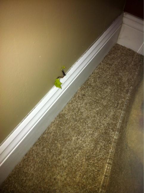 Invasive Ivy- Into my house!!!-image-2383366357.jpg