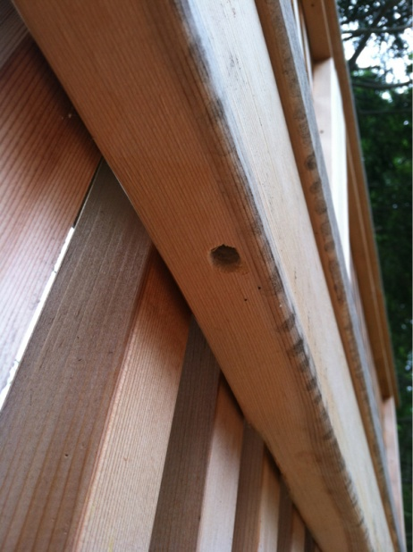 Uhh... What drilled a hole my deck?-image-2386339313.jpg