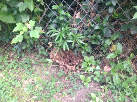 Backyard grass issues NEED HELP-image-2477360906.jpg
