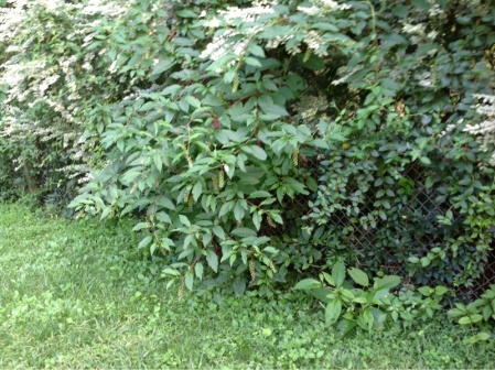 Backyard grass issues NEED HELP-image-248121902.jpg