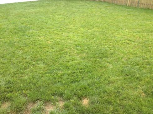 De-thatching lawn-image-2488139912.jpg